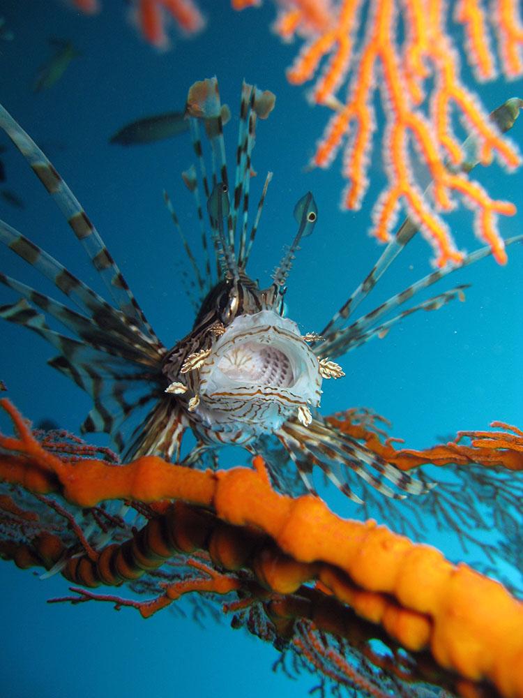 underwater photo course
