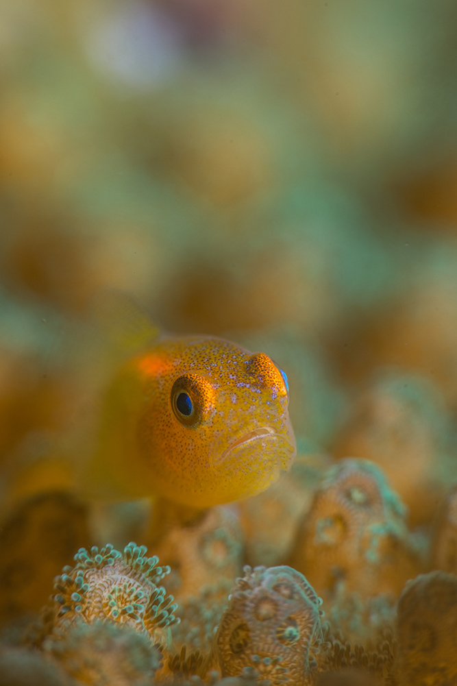 underwater photography course